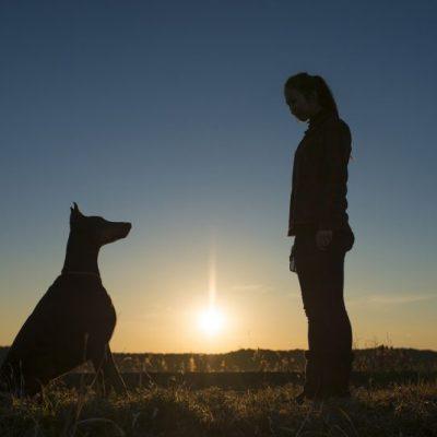 Entraînement_canin_chien_évaluation_sélection_zoothérapie